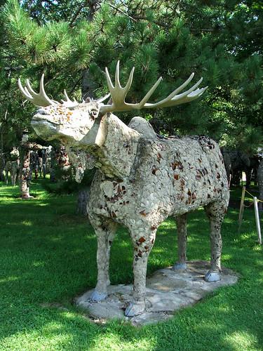 I Finally Found a Moose!