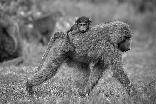 Hitching a ride - EXPLORED (August 19, 2019)