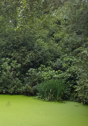 Green ++
