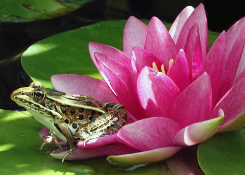 Flowering Froggy
