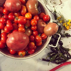 Image by thallingram (sassypants) and image name #heirloomtomatoes, ready to eat and process. Black Krim, San Marzano. Also some calendula and more jalapeños! Over 19 pounds this week. #tomatocontent #lovemygarden #yardtotable photo  about via Instagram ift.tt/33GpubN