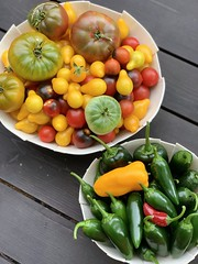 Image by valatal (vmolloy) and image name garden is rocking now #summergarden #grewitmyself #tomatoes #peppers photo