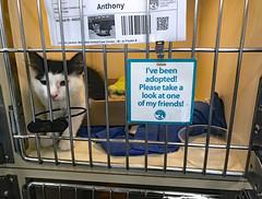 New Family Member Please consider adopting!