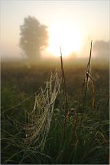 Туманный рассвет на Кузьминке