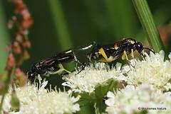 9 - Parasitic wasps > Ants