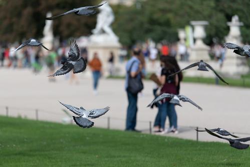 Incoming pigeons