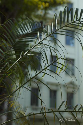 Havana_MG_6019