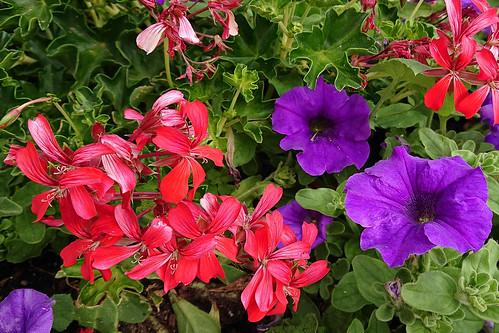 Flores de exterior (móvil)