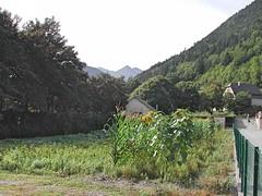 Guchen (bis)-Vallée d'Aure (5)_Fotor