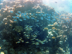 Underwater highway