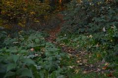 Bladeren en pad in Arnhem (135FJAKA_2551)