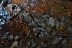 Bladeren in Arnhem (135FJAKA_2547)