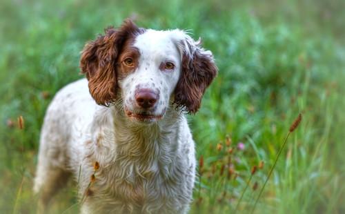 Rupert in the Meadow