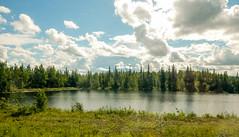 On the road; Denali to Fairbanks