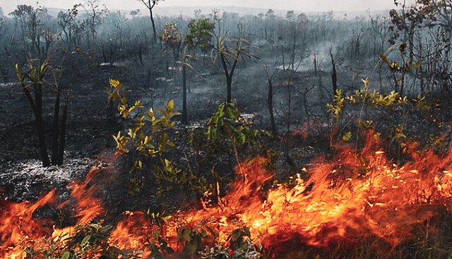 Wildfires become more common as the dry season approaches in the Amazon; ranchers and farmers use them to clear land for crops and pasture - Créditos: Diamantino city government