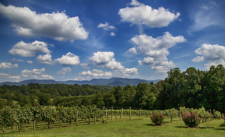 View at Silver Fork Winery