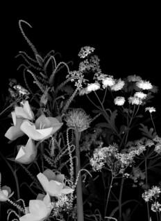 59821.02 Bouquet