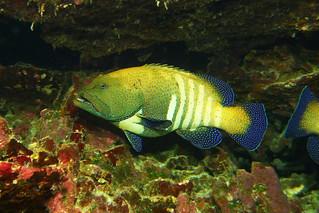 solid fish
