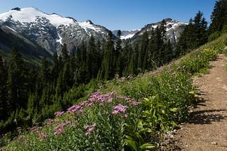 Trailside beauties