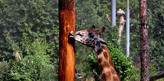 dierenpark Amersfoort  ..