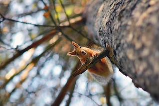 Головокружительная белка *  dizzy squirrel