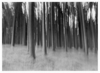 About forest / O lesie