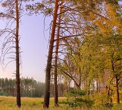 Morinig Forest (no. 3)