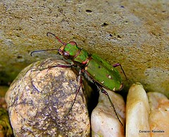 14 - Beetles