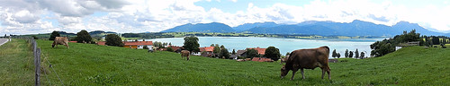 Forggensee, Bavaria - Germany (panorama) (N4151)