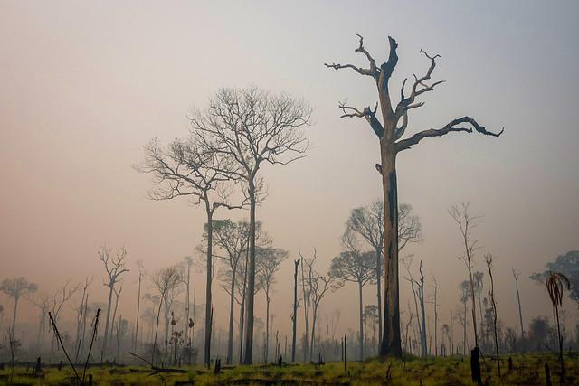 """""""O que vemos na Amazônia nunca aconteceu na história do país"""", diz pesquisador"""