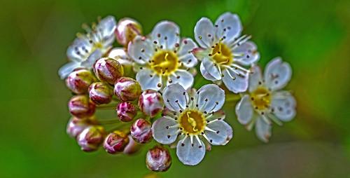 Flower Power DSC_5051