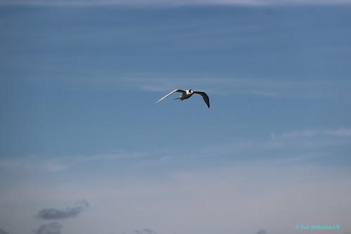 Puerto Madryn, Atlantic Ocean