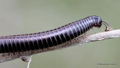 15 - Other arthropods