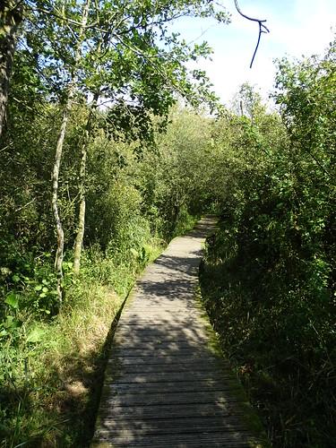 Moerputten swamp near Den Bosch