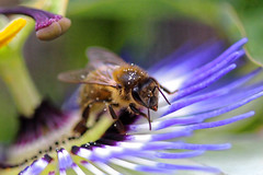 Bee and its pollen