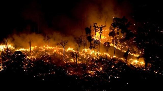 Biodiversidade perdida em queimadas na Amazônia levará décadas para se recuperar