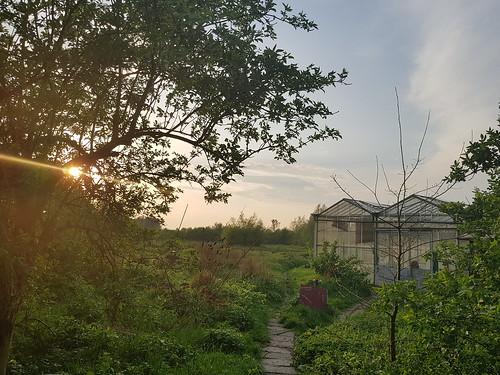 Very green house