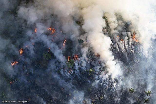 Via Campesina: Queimar a Amazônia é crime contra a humanidade