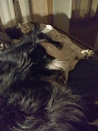 8/12 Loki fast asleep