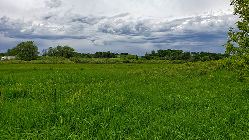 Sugar River Wetlands State Natural Area