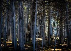 Del Monte Forest No.2