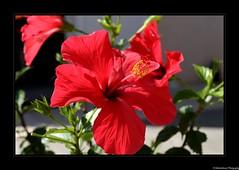 Fleurs du Jardin- La Rochelle- Charente Maritime- France - Photo of Saint-Ouen-d'Aunis