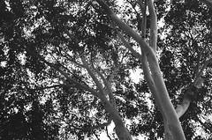 Grainy tree branches
