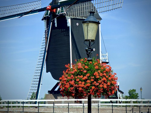 Windmolen en Geraniums .