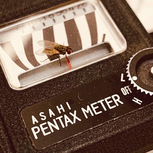 Fly meter