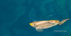 Surin and Similan archipelago, yacht cruise and underwater photos   XOKA1201bs