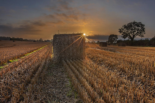 Sunrise on the stubble