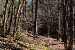 Au bord de la Cure dans la forêt domaniale au Duc