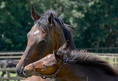 Parvaneh & American Pharoah filly foal