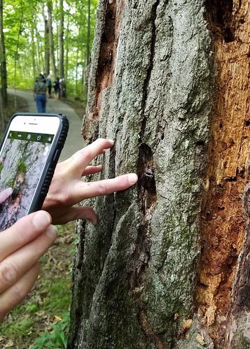 Exploring nature at Fox River Park
